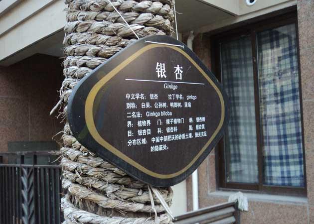 水立方自由城树名牌